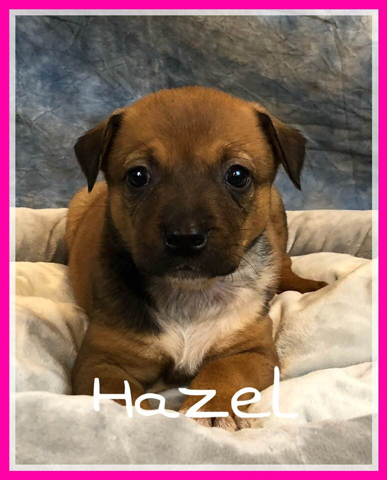 adoptable-hazel
