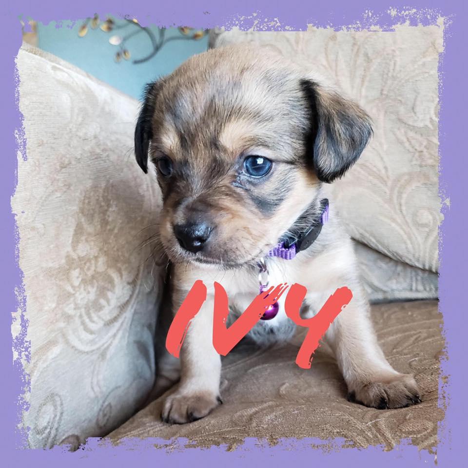 adoptable-ivy