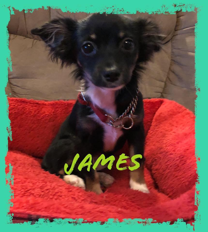 adoptable-james