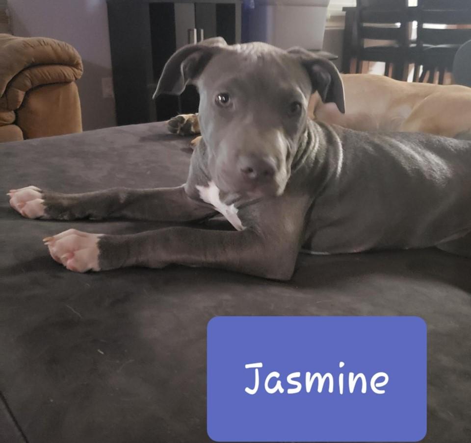 adoptable-jasmine