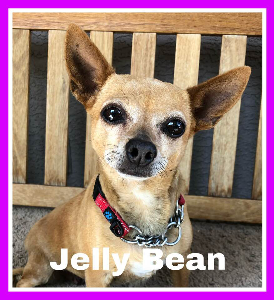 adoptable-jelly