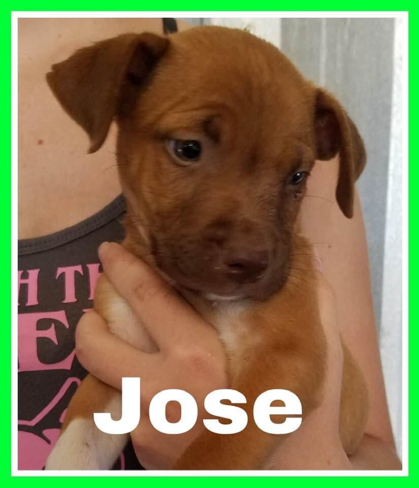 adoptable-jose