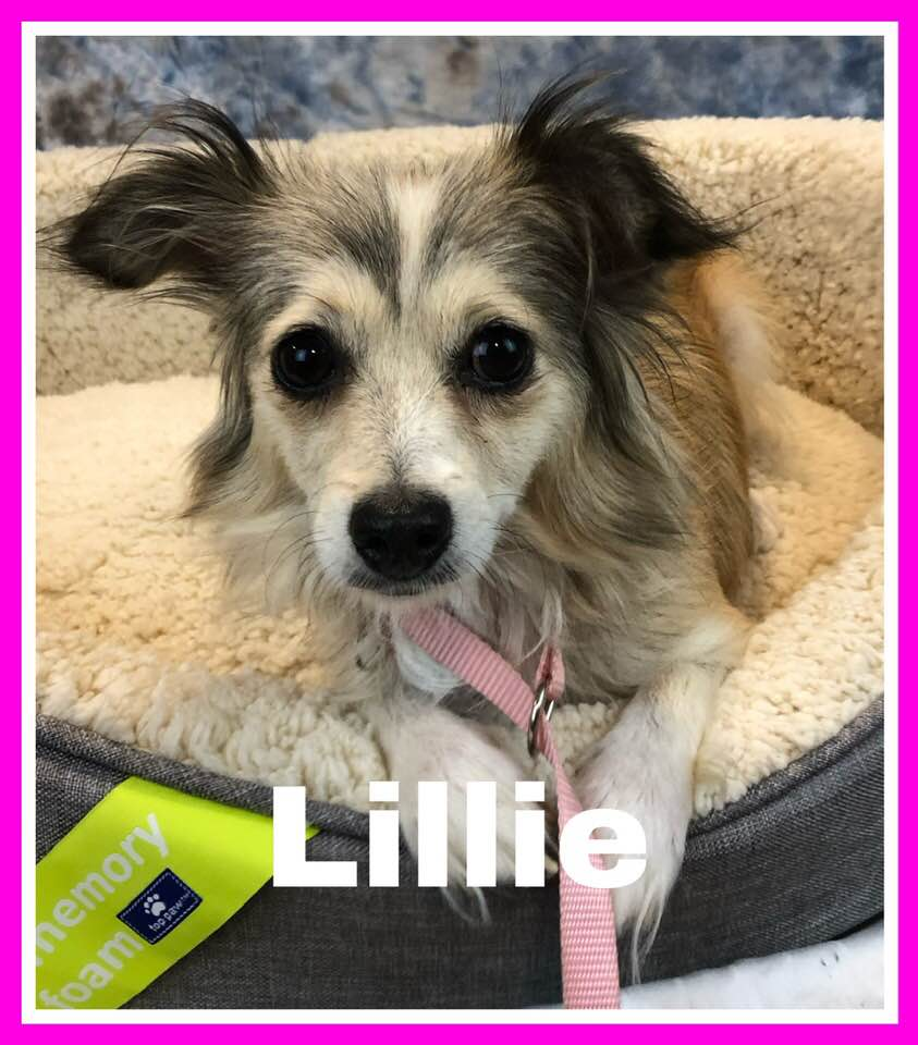 adoptable-lilly