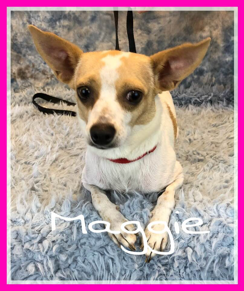 adoptable-maggie