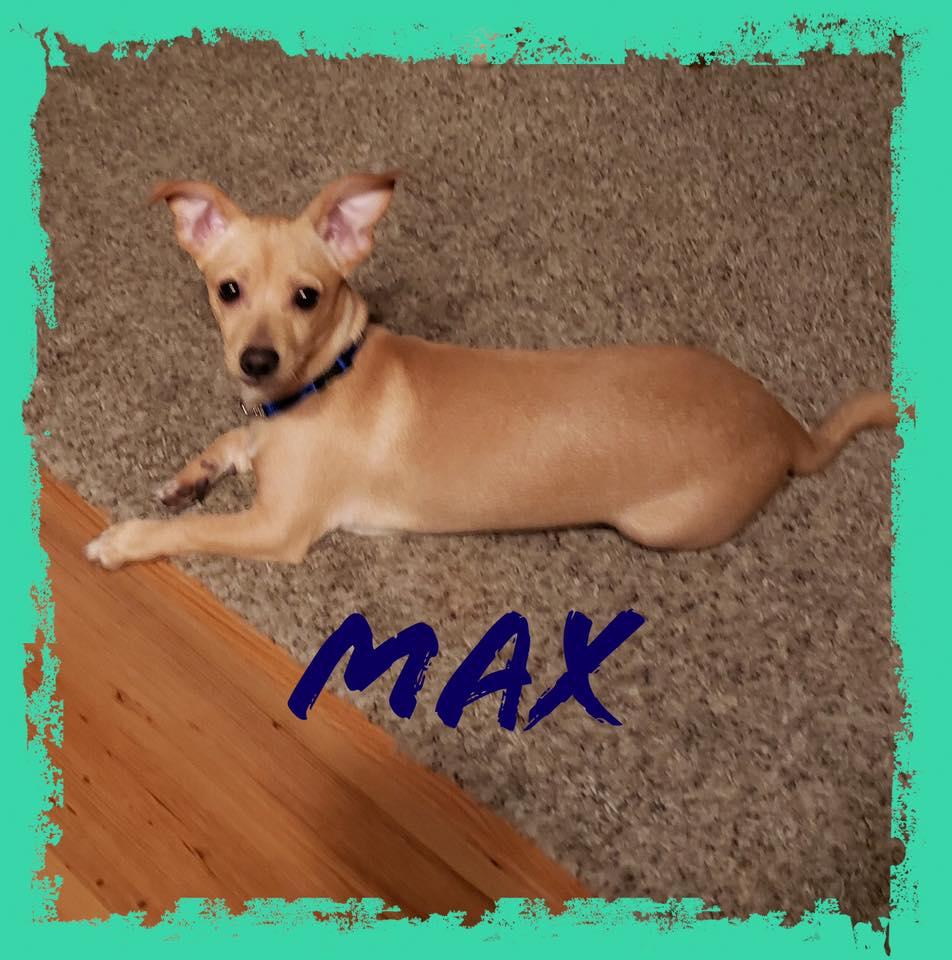 adoptable-max