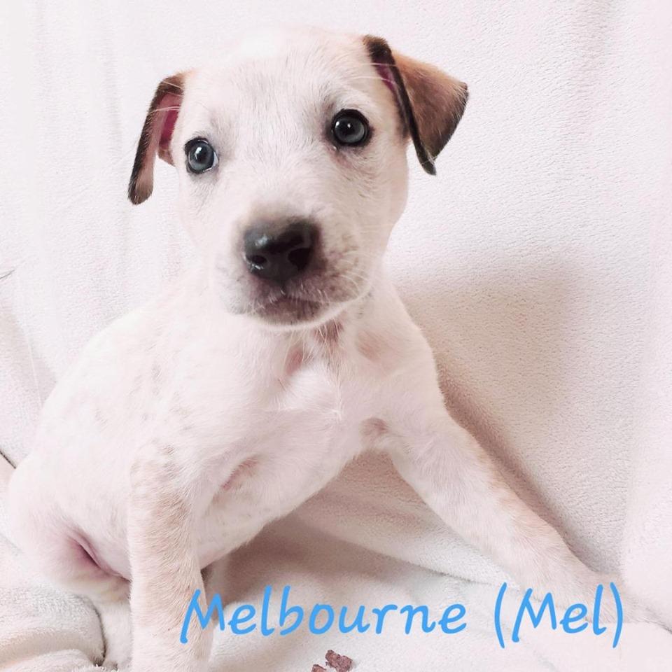 adoptable-melbourne