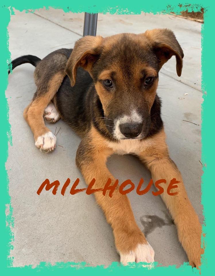 adoptable-millhouse