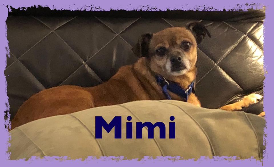 adoptable-mimi