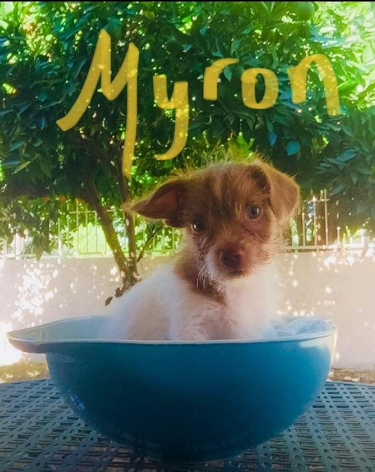 adoptable-myron