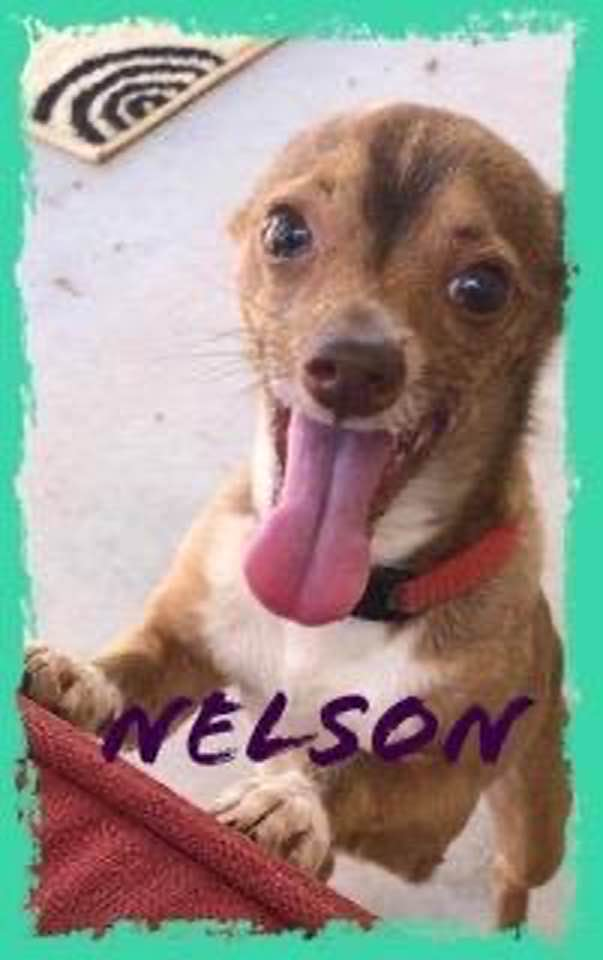 adoptable-nelson