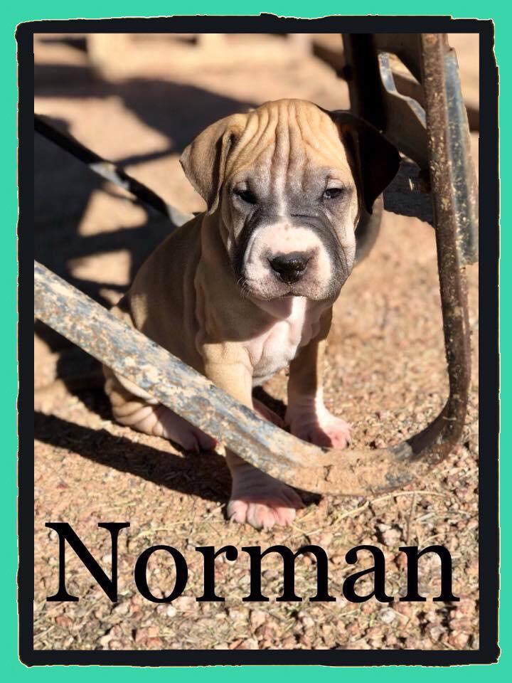 adoptable-norma