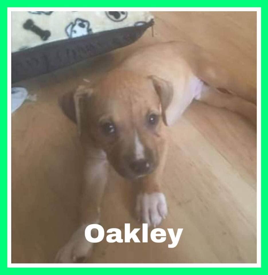 adoptable-oakley