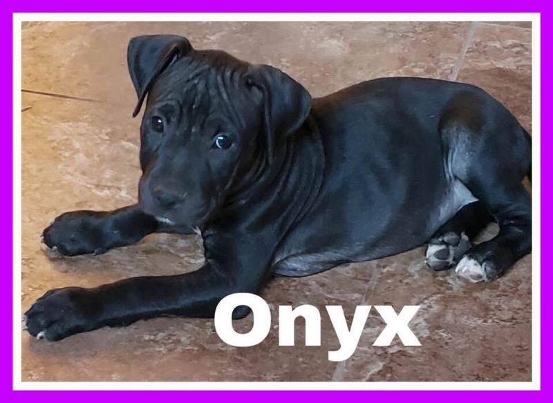 adoptable-onyx
