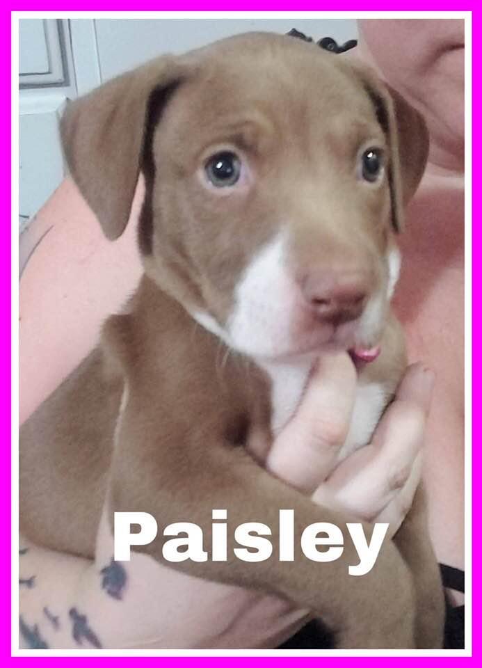 adoptable-paisley