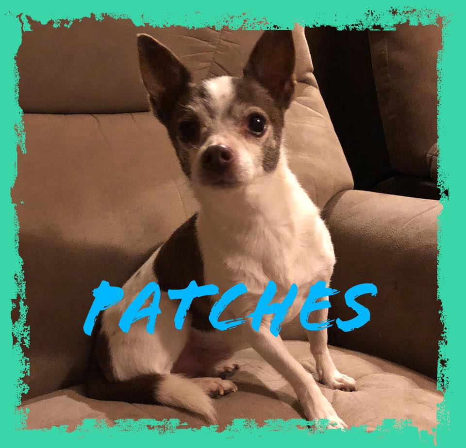 adoptable-patches