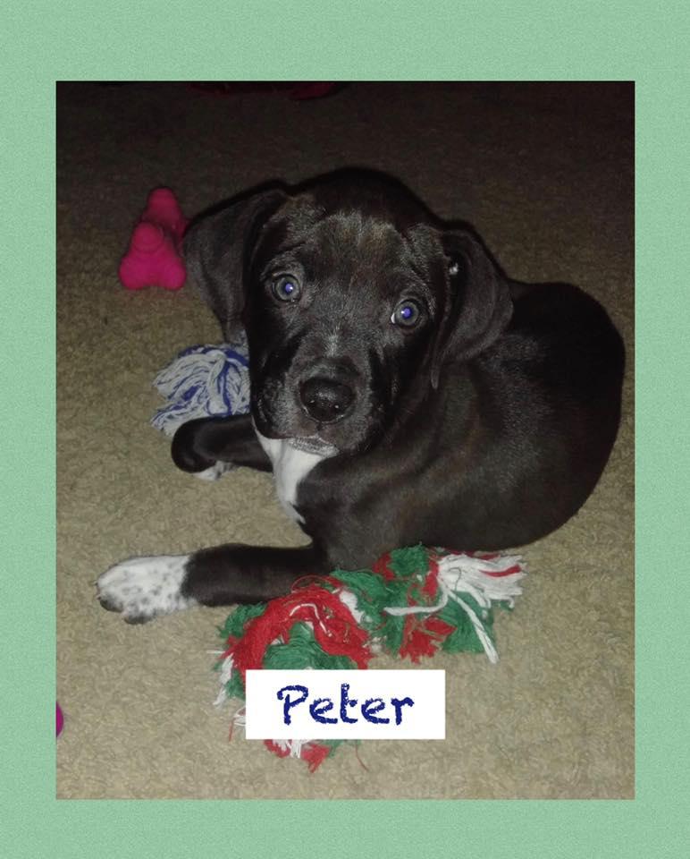 adoptable-peter