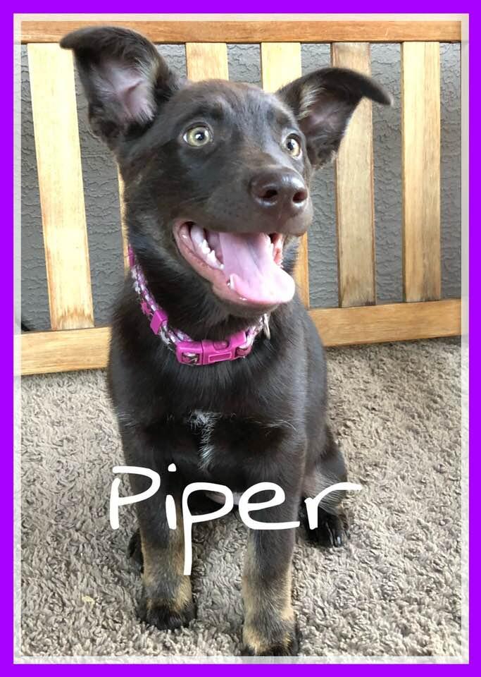 adoptable-piper
