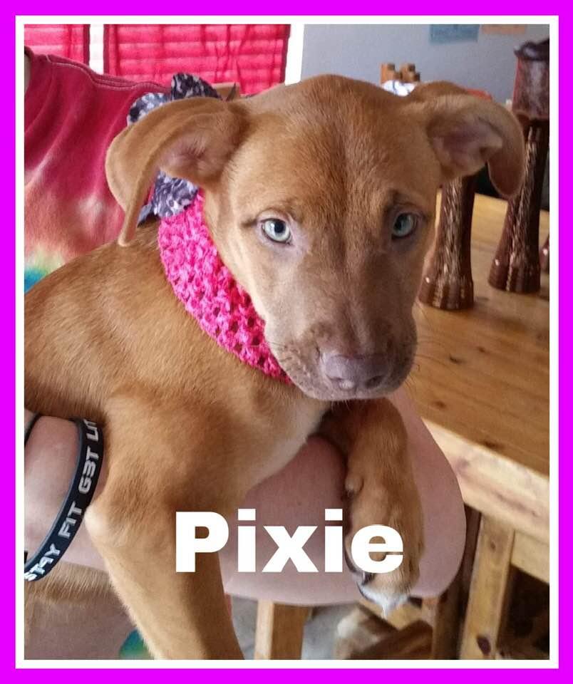 adoptable-pixie