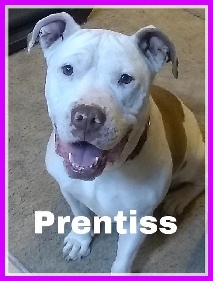 adoptable -prentiss-smiling