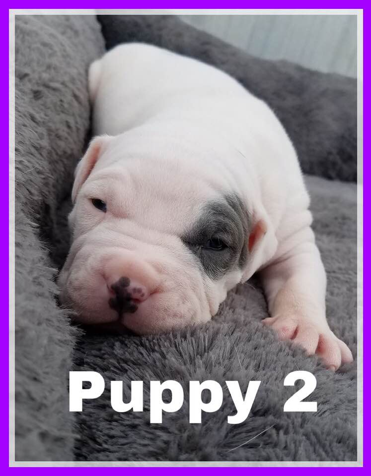 adoptable-puppy2