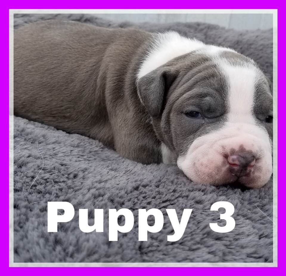 adoptable-puppy3