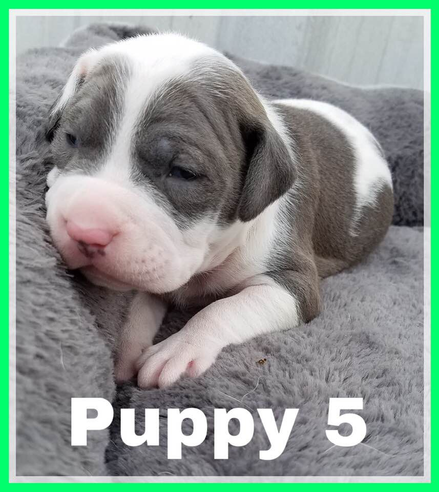 adoptable-puppy5