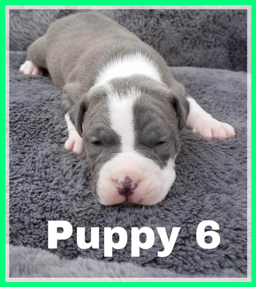 adoptable-puppy6