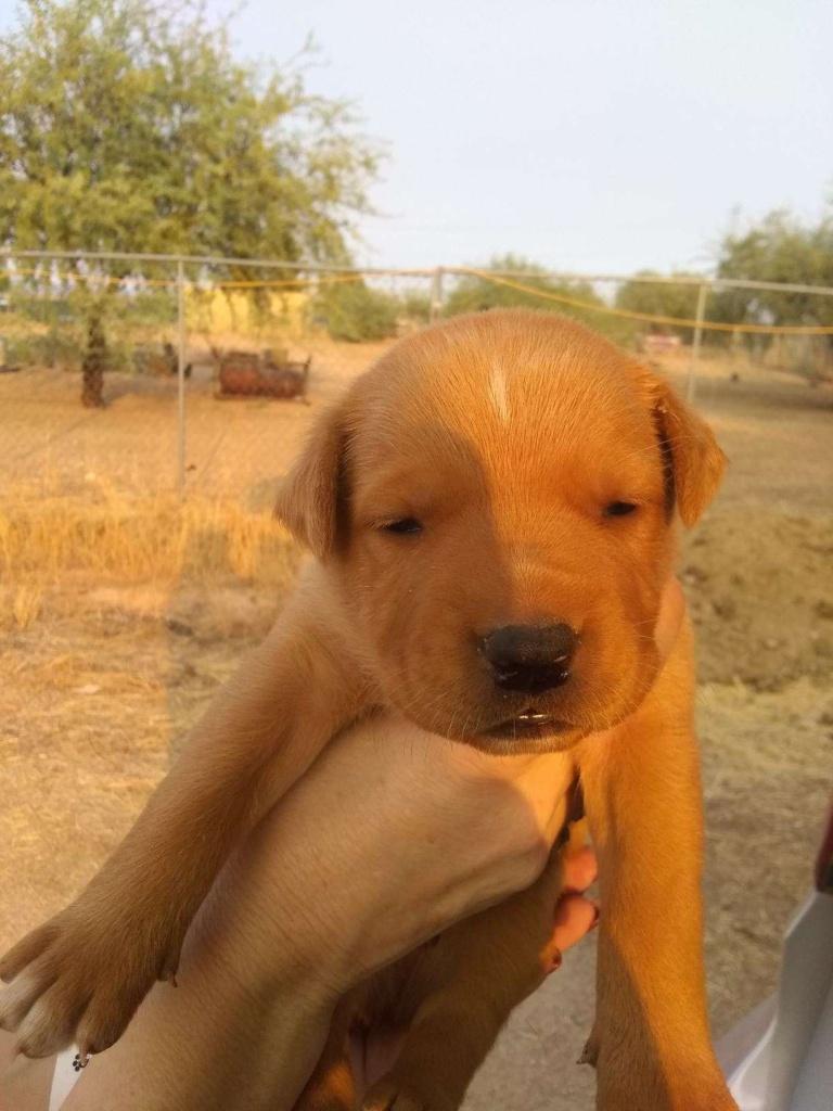 adoptable-puppymale2