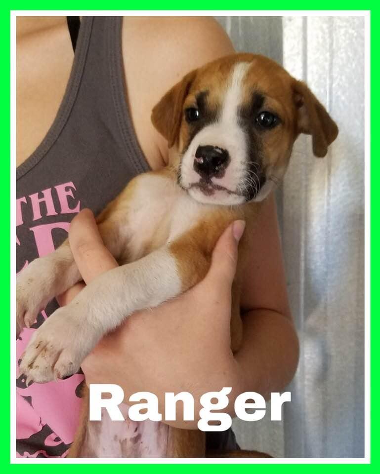 adoptable-ranger