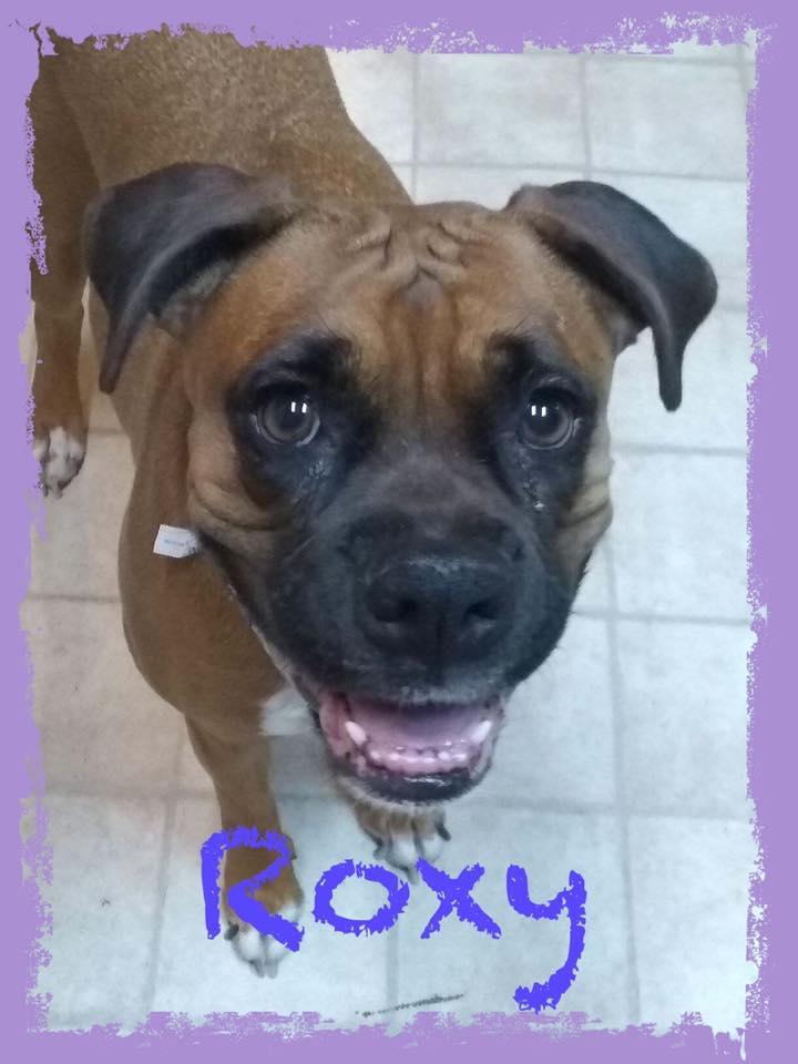 adoptable-roxy