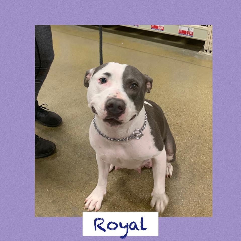 adoptable-royal