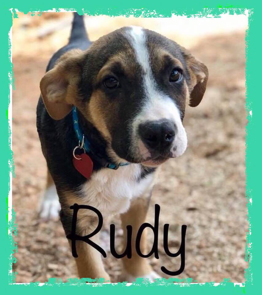 adoptable-rudy