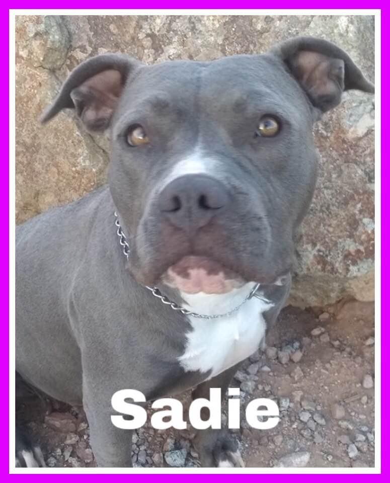 adoptable-sadie