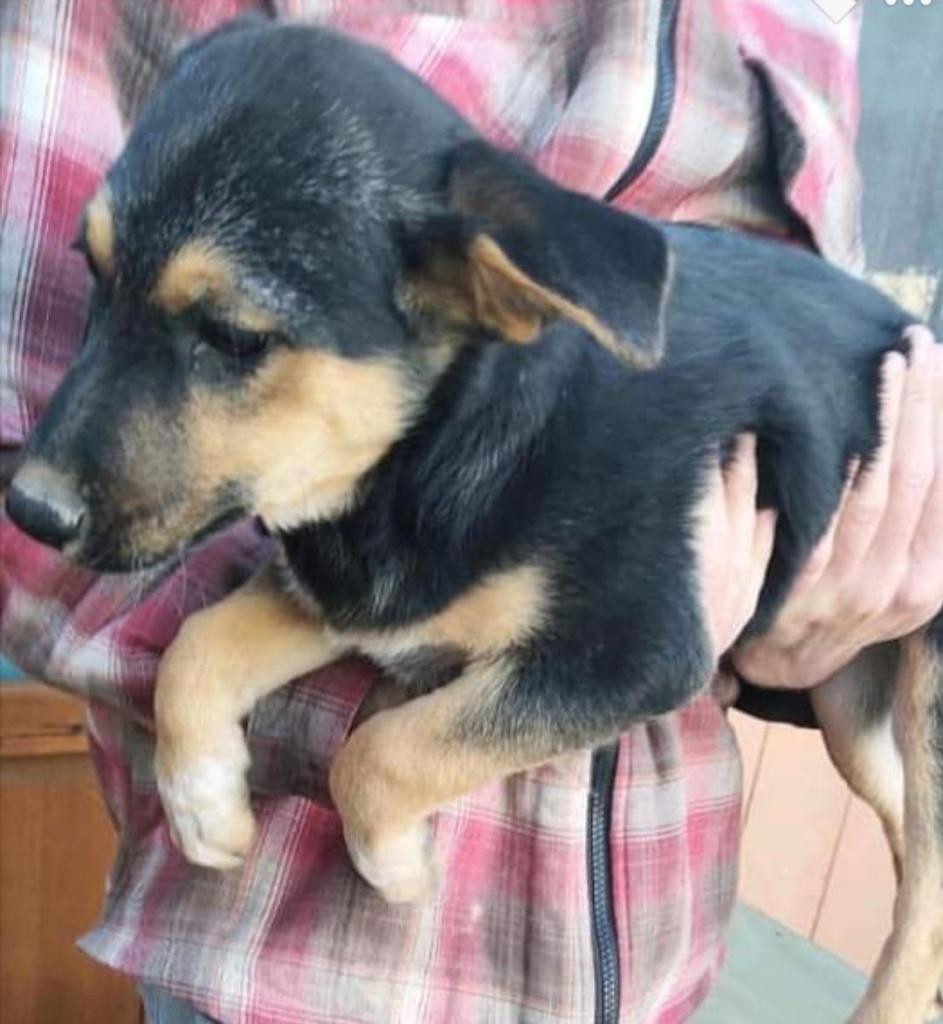 adoptable-sasha