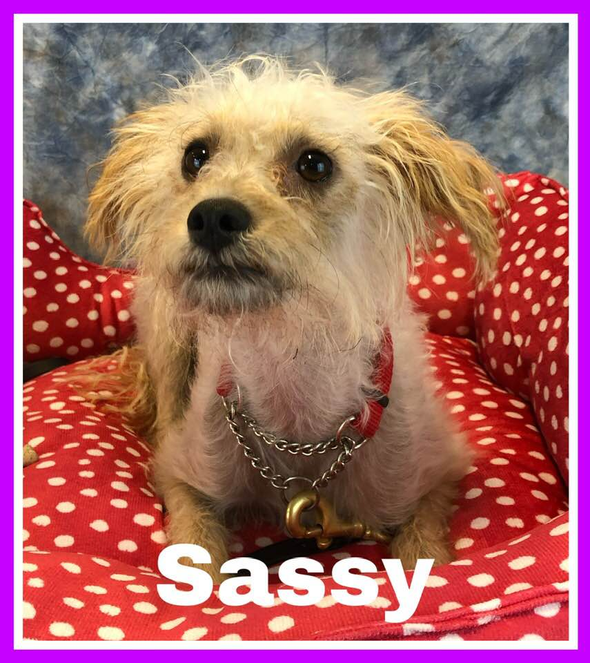 adoptable-sassy