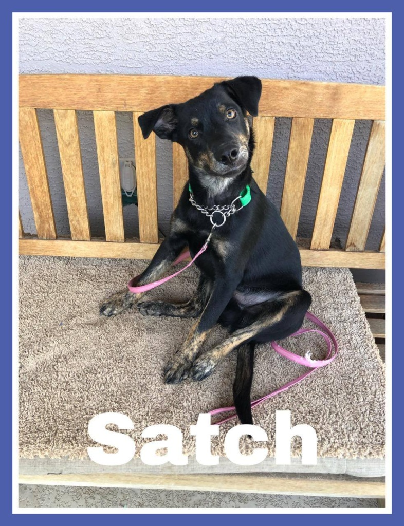 adoptable-satch