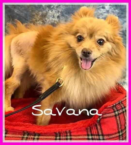 adoptable-savana