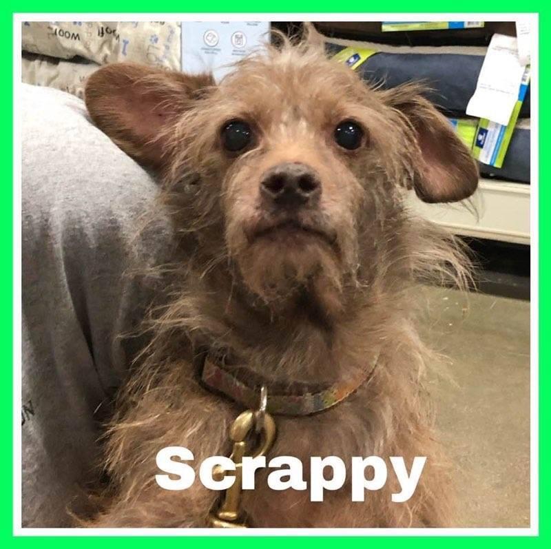 adoptable-scrappy