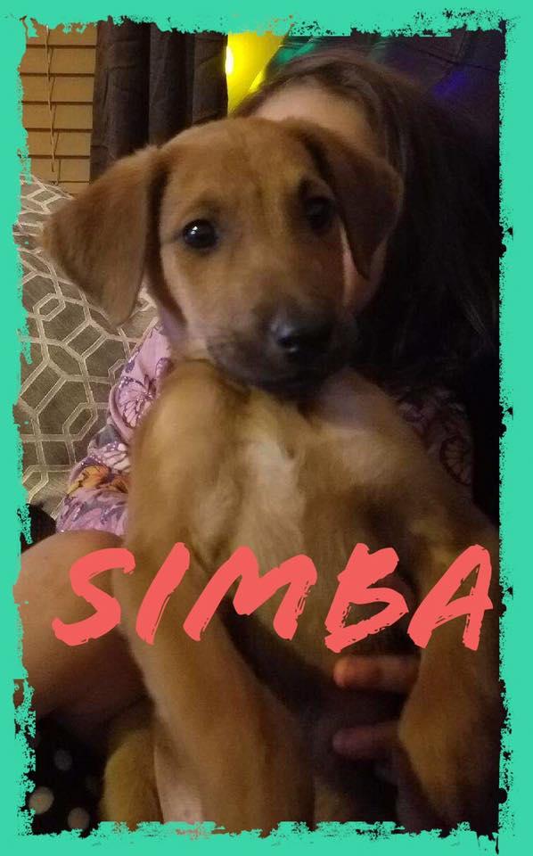 adoptable-simba