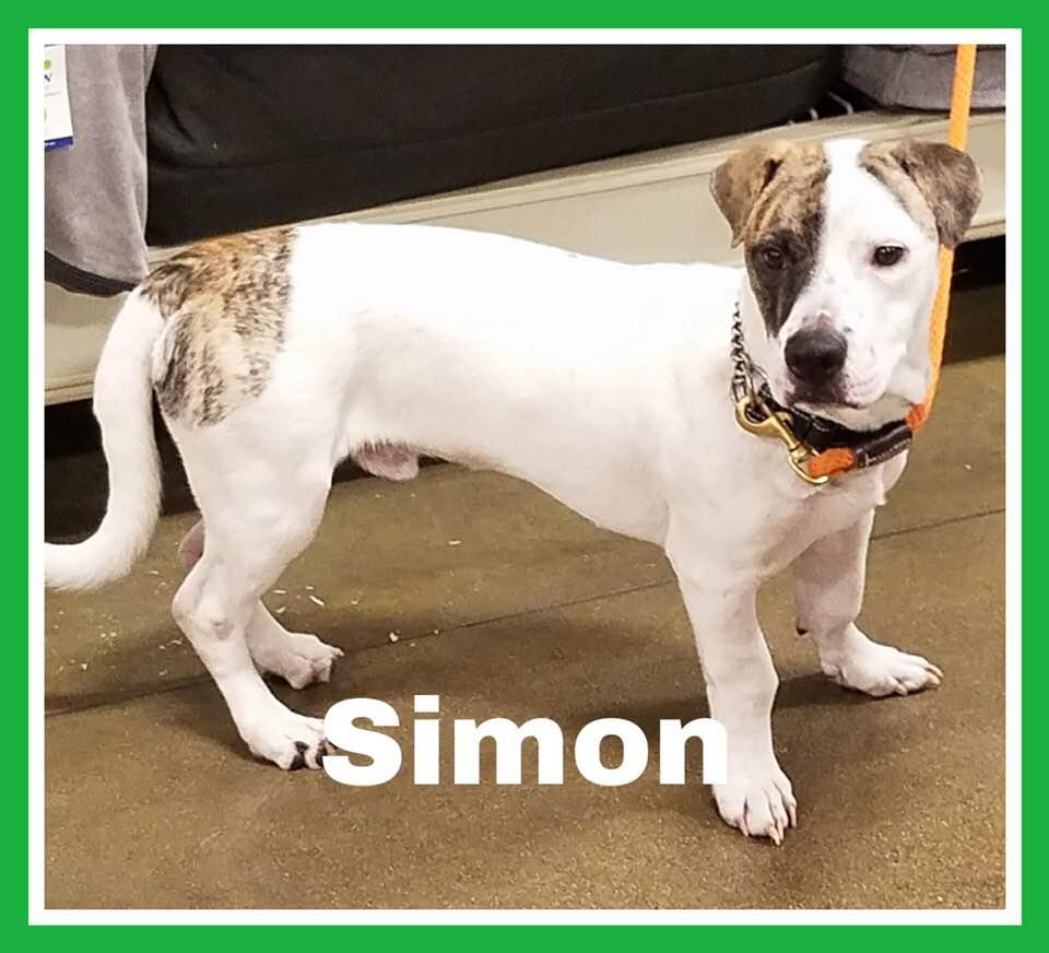 adoptable-simon