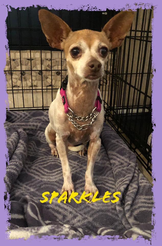 adoptable-sparkles