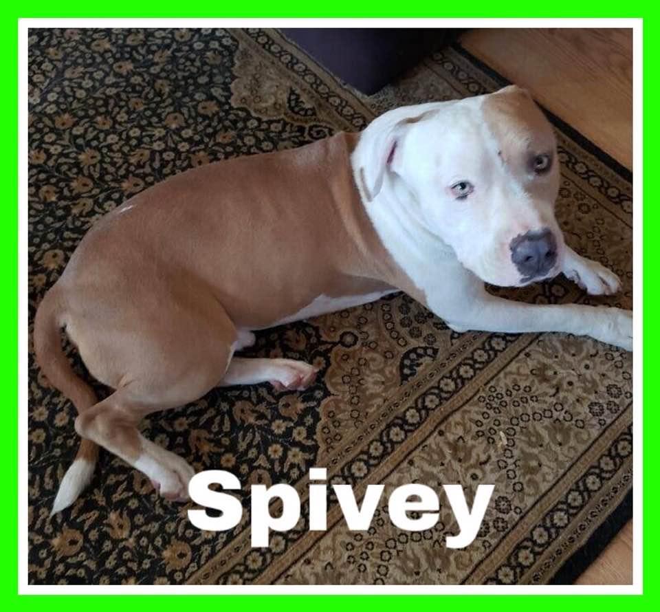 adoptable-spivey