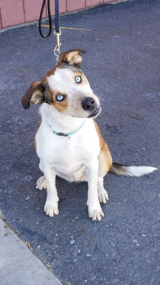 adoptable-squirt