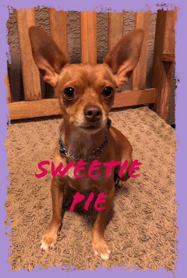 adoptable-sweetiepie
