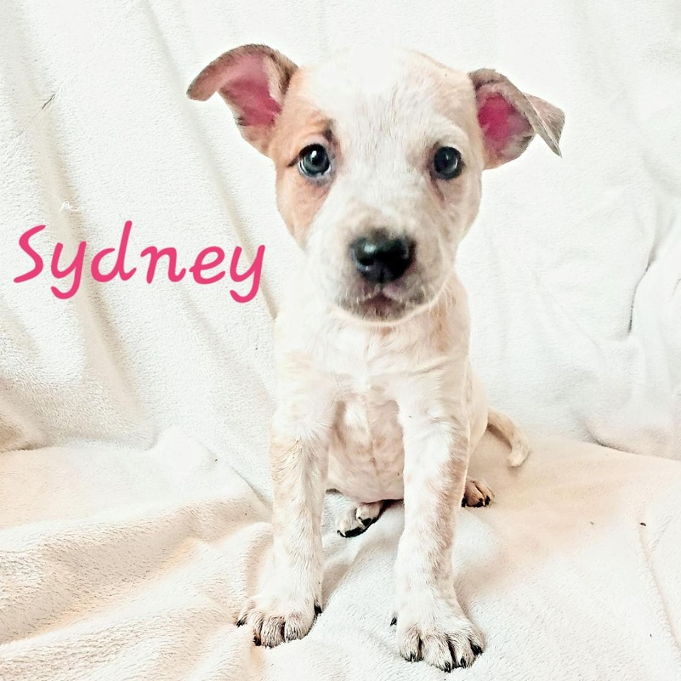 adoptable-sydney