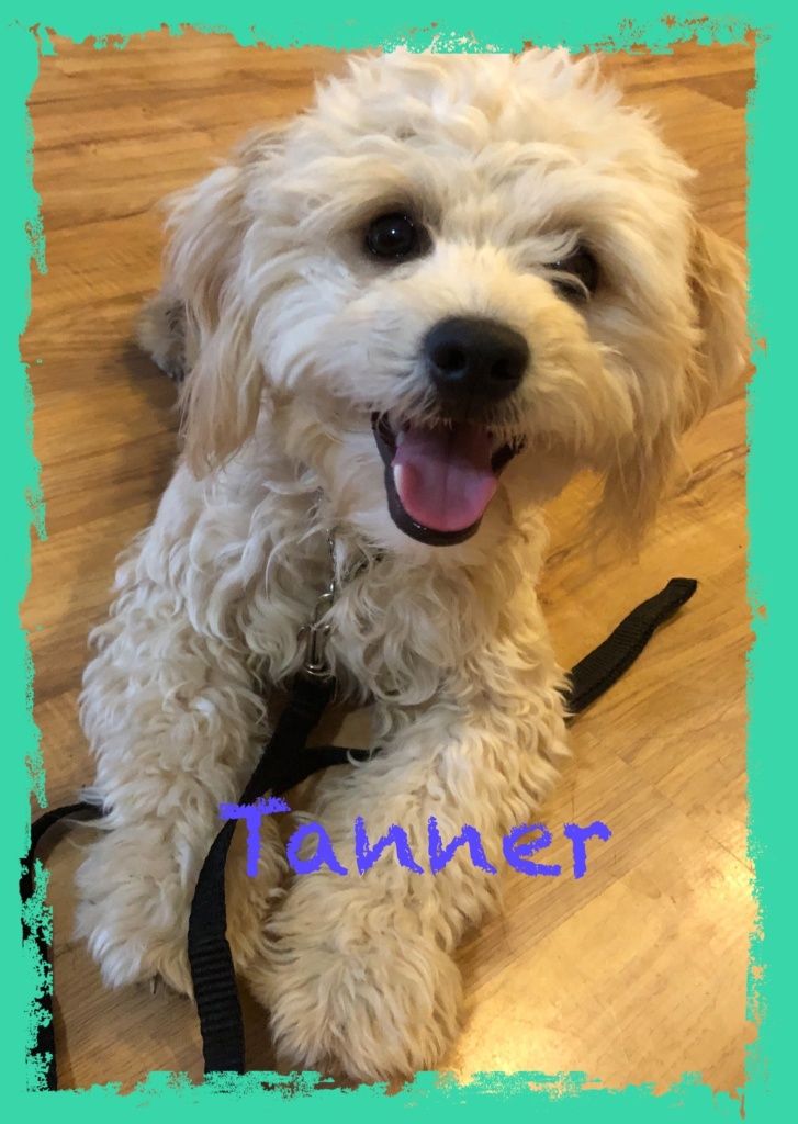 adoptable-tanner
