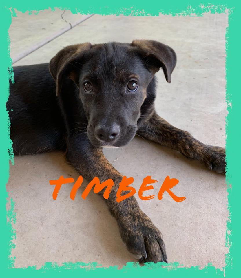 adoptable-timber