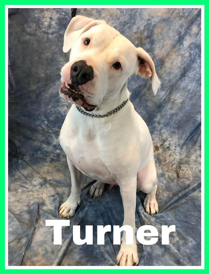 adoptable-turner3