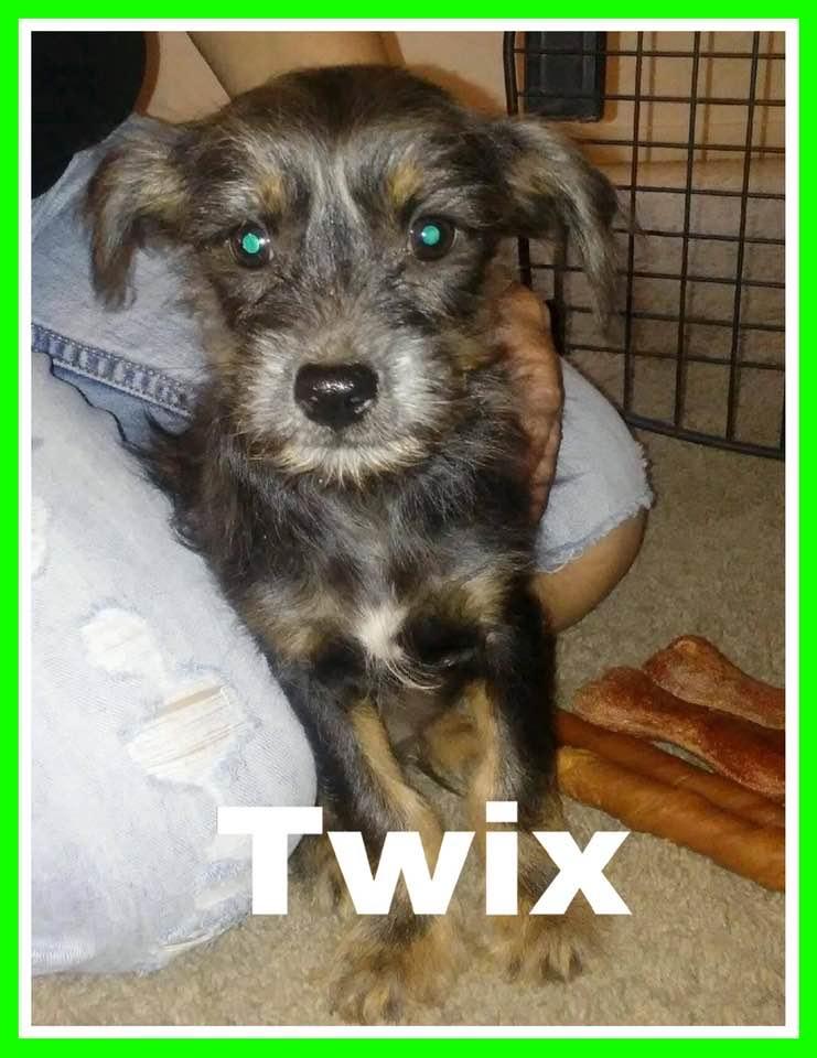 adoptable-twix