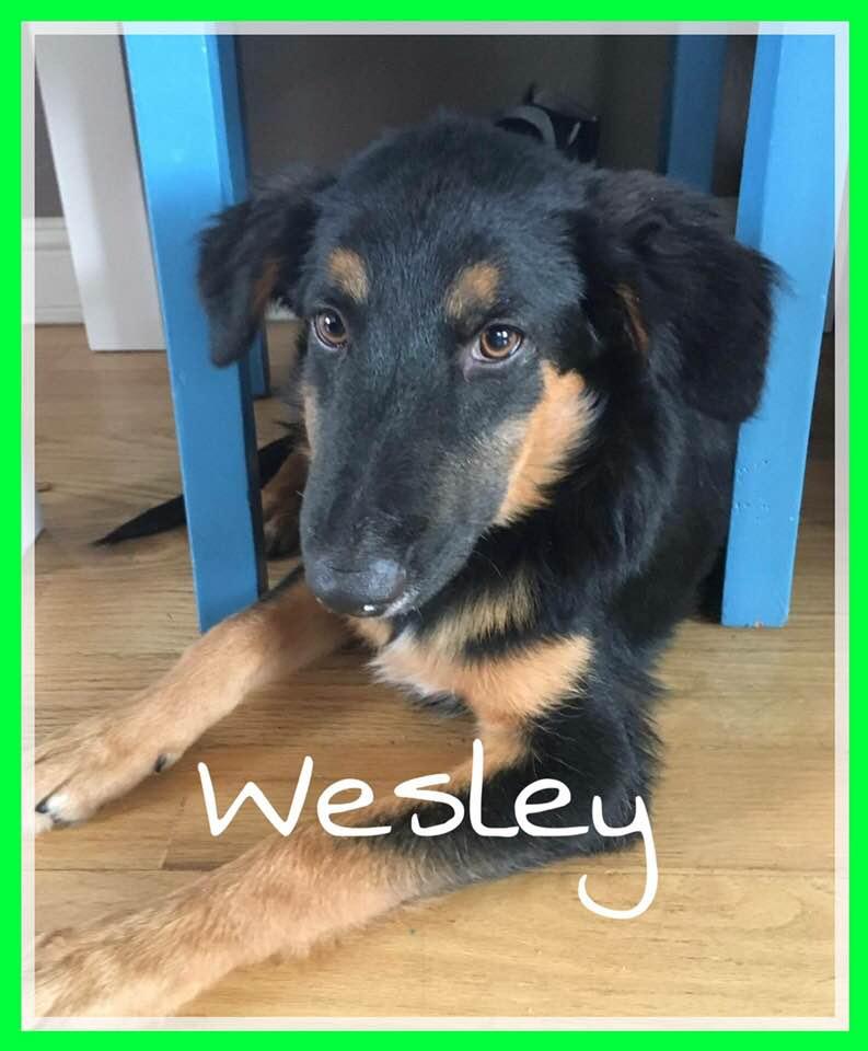 adoptable-wesley